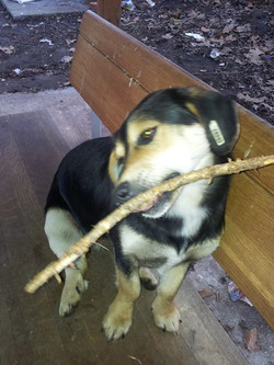 Luna with playing stick