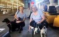 flight partner bosnian dog