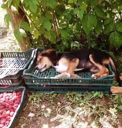 Boki taking a nap