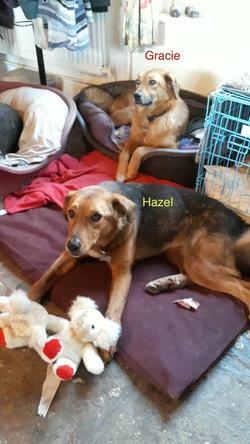 Gracie&HazelUKFoster7