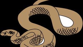 Eastern Brown Snake in the Heart of Brisbane/Australia