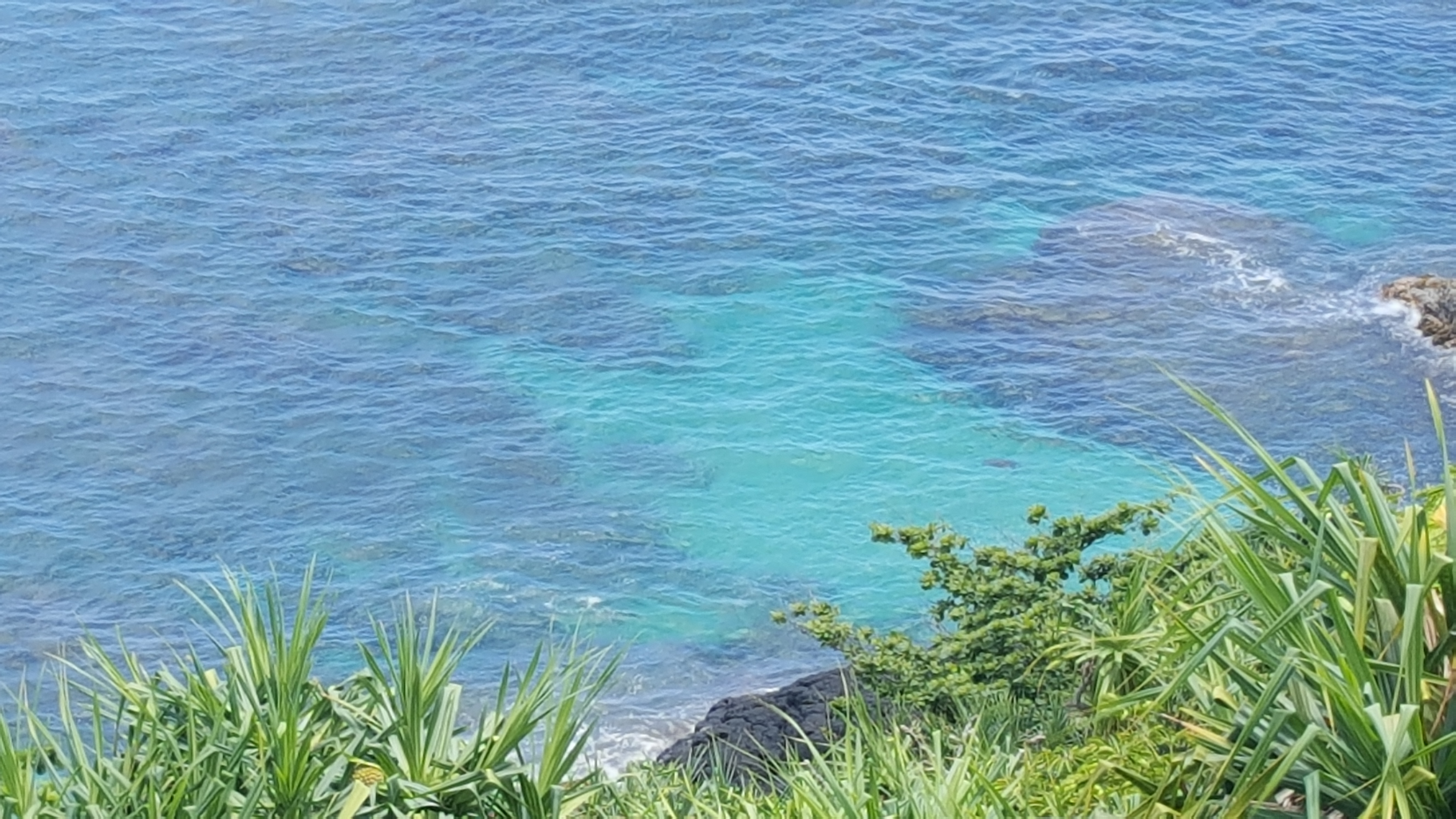 Sea turtles galore at The Cliffs!