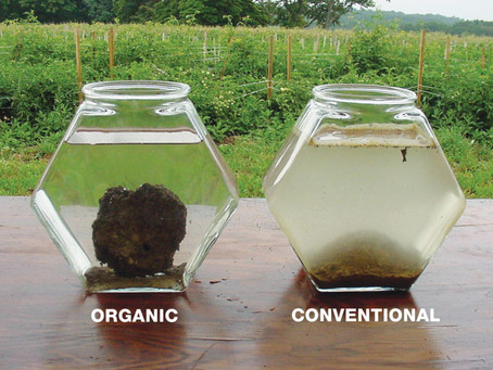 Do we really need to turn the soil?