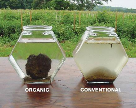 Organic vs conv.jpg