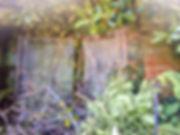 00-overgrown_orig.jpg