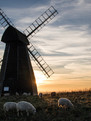 Rottingdean Smock Mill
