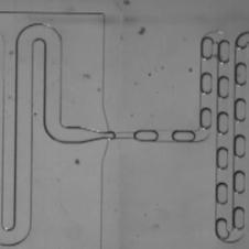 droplet_microfluidics.mp4