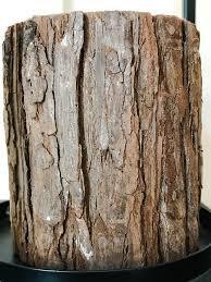 Bougie écorce marron de Broste