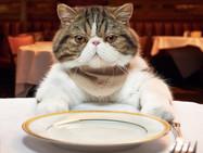 Кошкино мясо. Едят ли швейцарцы котов?