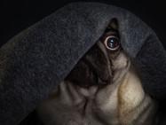Фейерверки ‒ страх домашних животных
