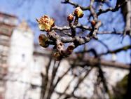 В Женеве официально наступила весна!