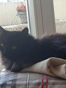 Жительница Швейцарии взяла домой трехлапую кошку из  приюта в Азове