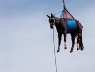 В синем небе над горой пролетела пара лошадей