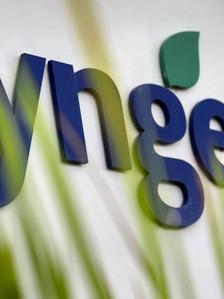 Швейцарская Syngenta займётся контролем качества семян под Воронежем