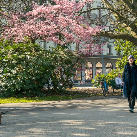 В Женеве пришла весна. Март 2021
