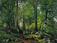 Два древних буковых леса в Швейцарии включены в список Всемирного наследия ЮНЕСКО