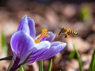 Дождались: в Женеву пришла весна