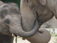 Хоботы слонов вдохновили учёных из Женевы
