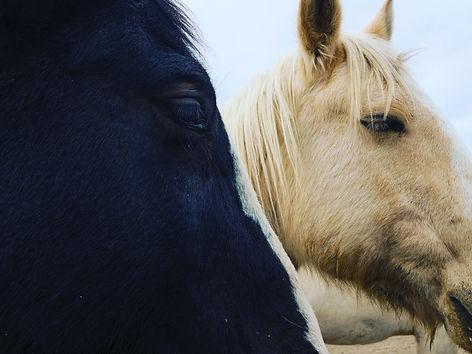 Colorado Ranch Horses