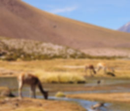 Flamingo travel agency, Pueblo Machuca, Flamingo travel agency, Geyser del tatio, San PEdro de Atacama