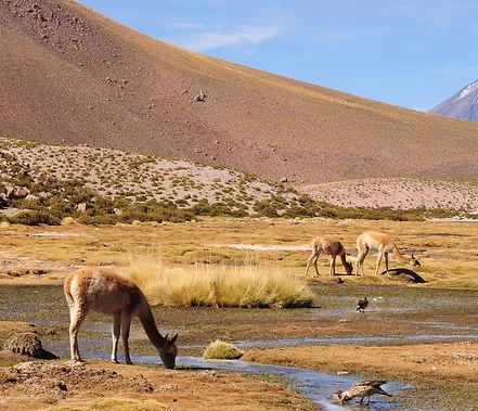 Flamingo travel agency, Pueblo Machuca, Flamingo travel agency, Geyser del tatio, San PEdro de Atacama