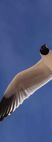 gaviota, flamingo travel agency, piedras rojas