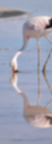 flamingo travel agency, laguna chaxa, san pedro de atacama
