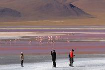 Salar d'uyuni, flamingo travel agency, San Pedro de atacama