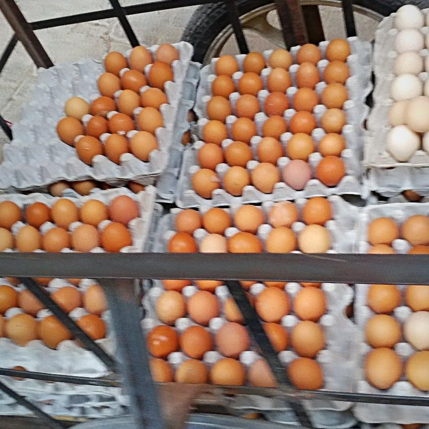 Eggs in a wagon