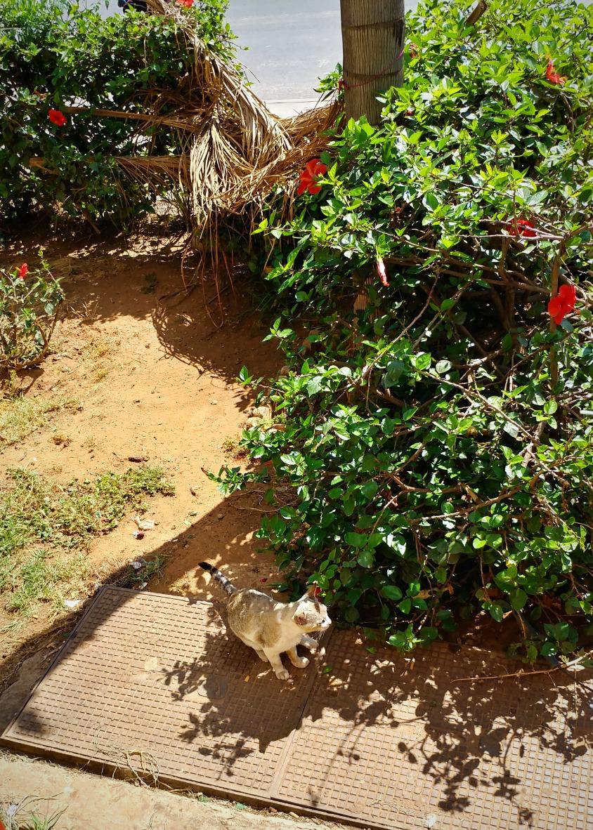 Bush cat