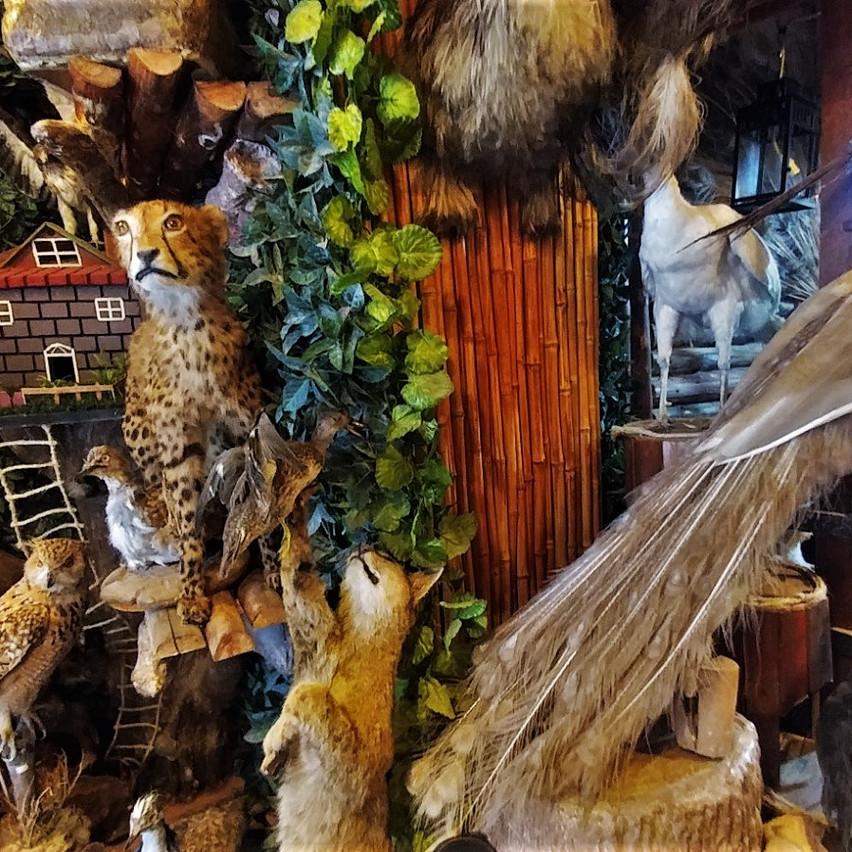 Taxidermy shop