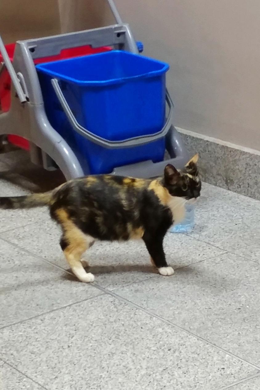Airport cat