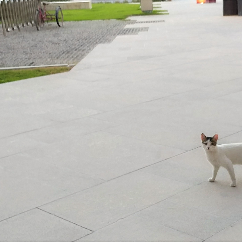 Cats Outside the Student Center