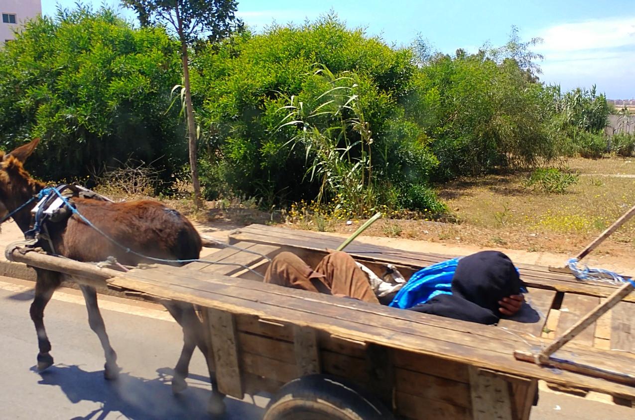 Brown donkey wagon