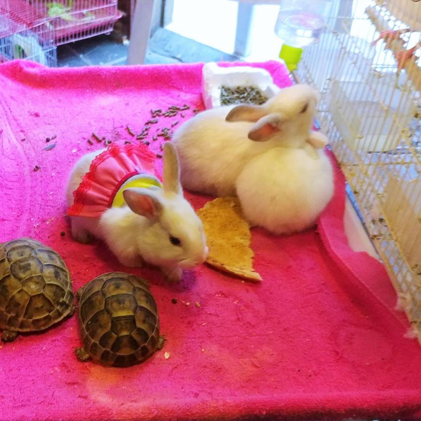 Turtles & bunnies