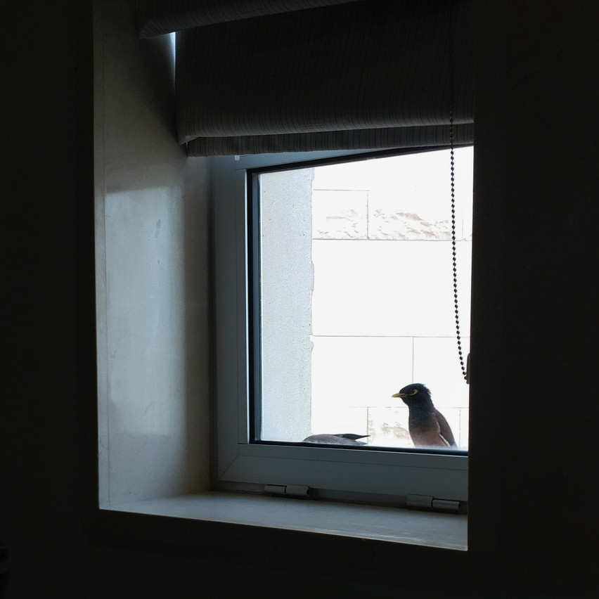 Birds at my window