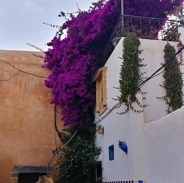 Blue Building at the Kasbah Udayas