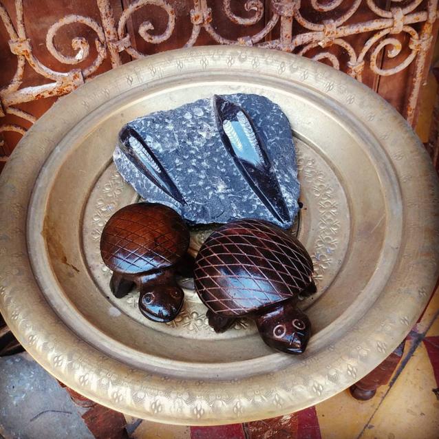Wooden turtles