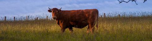 vache-paysage-2_edited.jpg