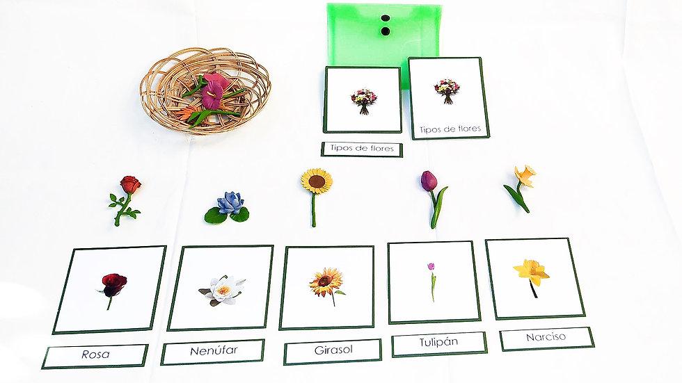 Tarjetas tipos de flores