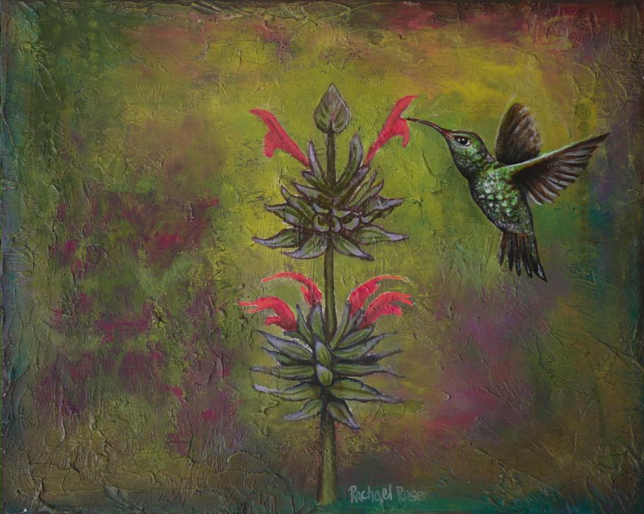 Hummingbird Focus