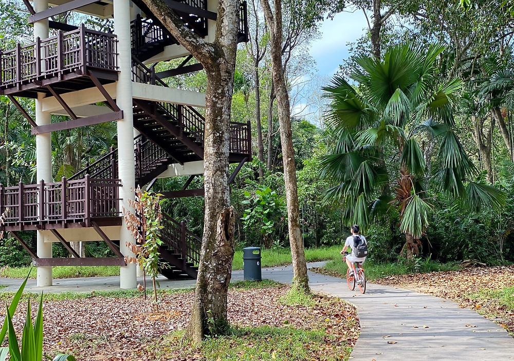 Pasir Ris Bird Watching Tower at Pasir Ris Park