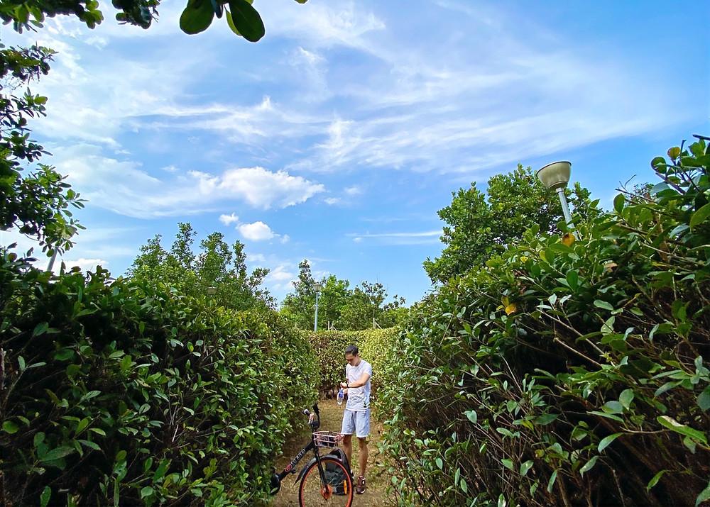 Navigating through the Pasir Ris Maze Garden