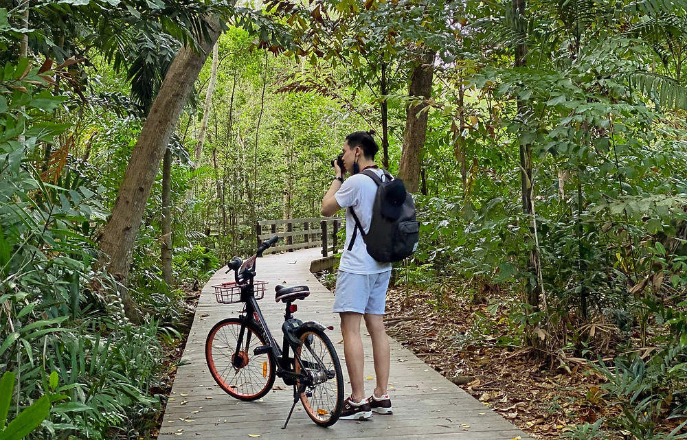 Taking photos at the boardwalk of the Pasir Ris Mangrove Forest