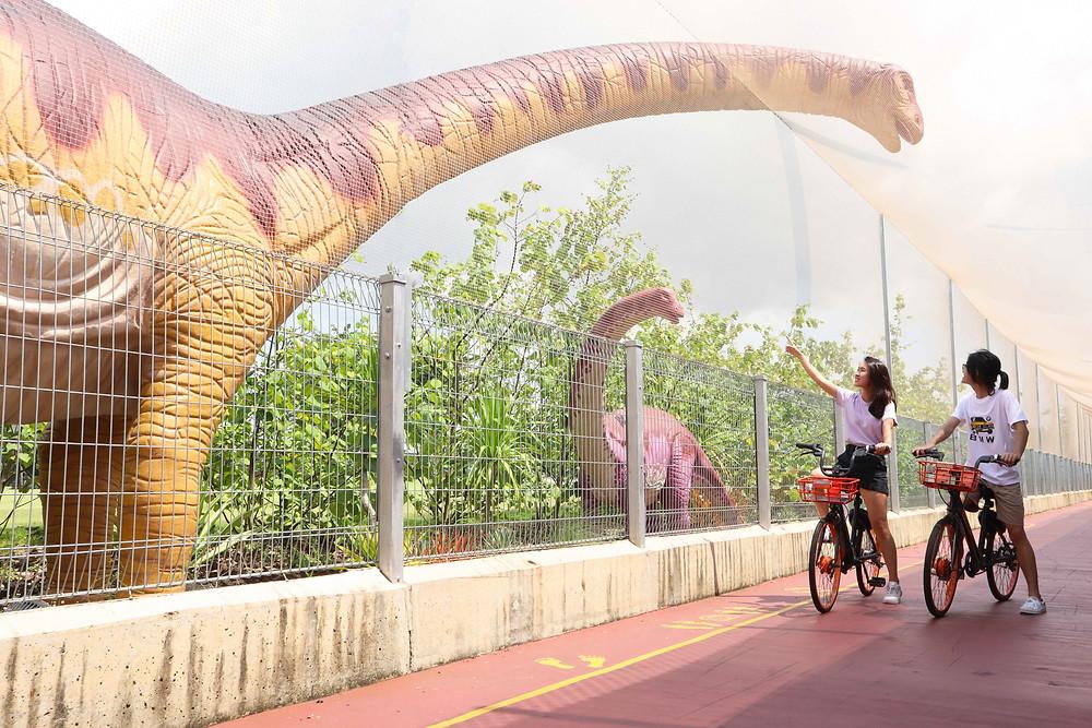 Girl and guy cycling along Changi Jurassic Mile