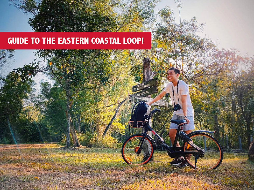BEST Scenic cycling route around the East of Singapore! (Eastern Coastal Loop)