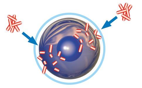 Anti Bacterial.jpg