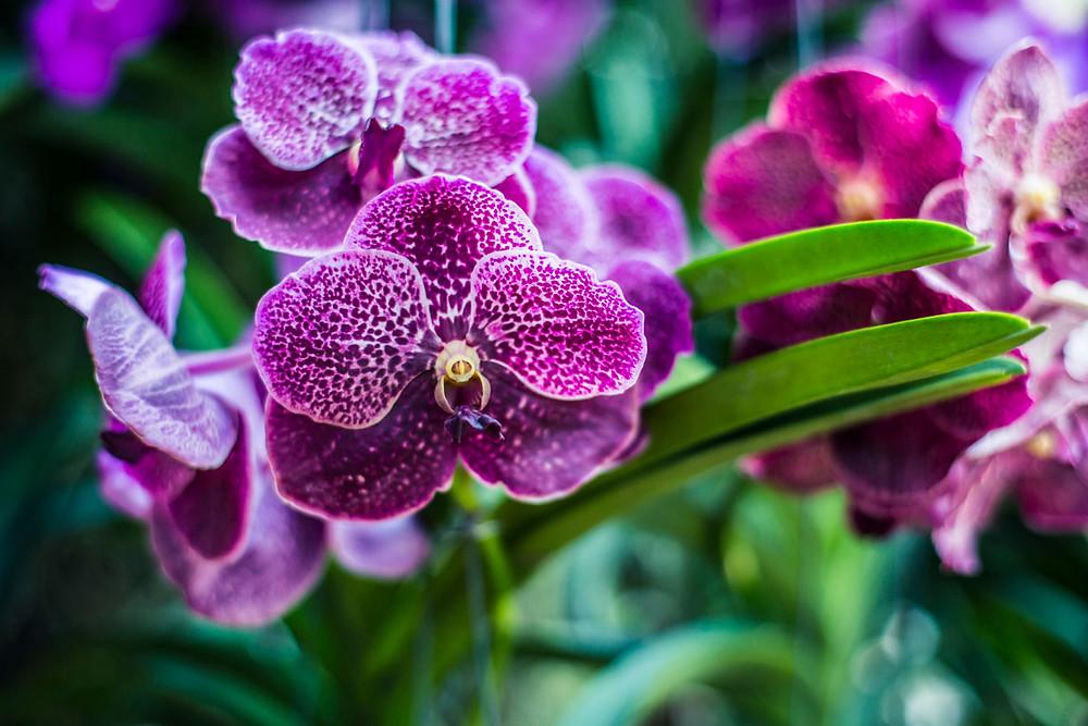 commander une orchidée à Paris livraison en 2 heures.