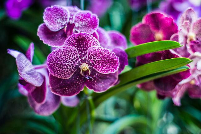 envoyer-orchidée-paris-les-bouquets-de-l