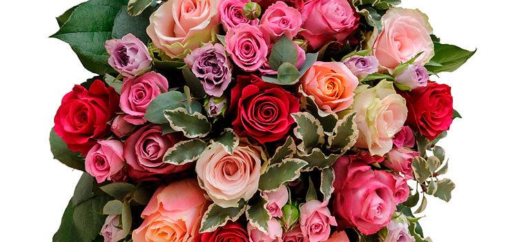 Les roses de la Muse